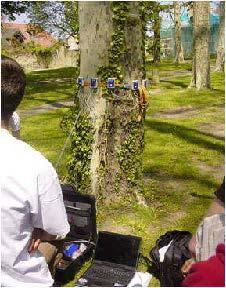 Licence professionnelle Gestion durable des arbres et arbustes en aménagement paysager